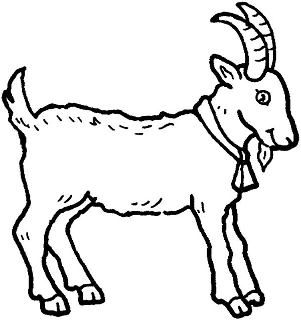 Drawn goat for kid step by step animal Goat Animal Color of Picture