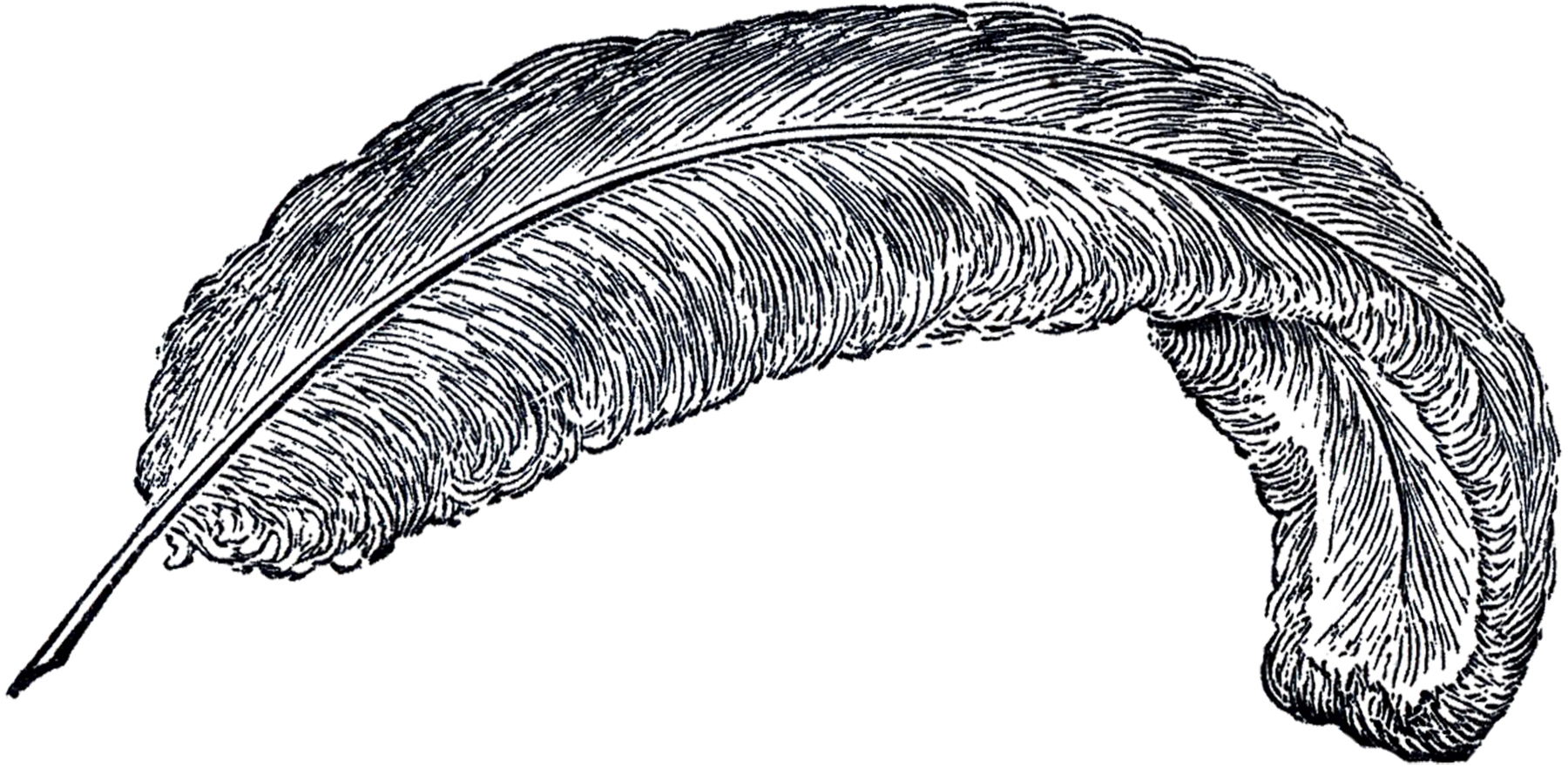 Feather clipart Clip Free Free Vintage Vintage