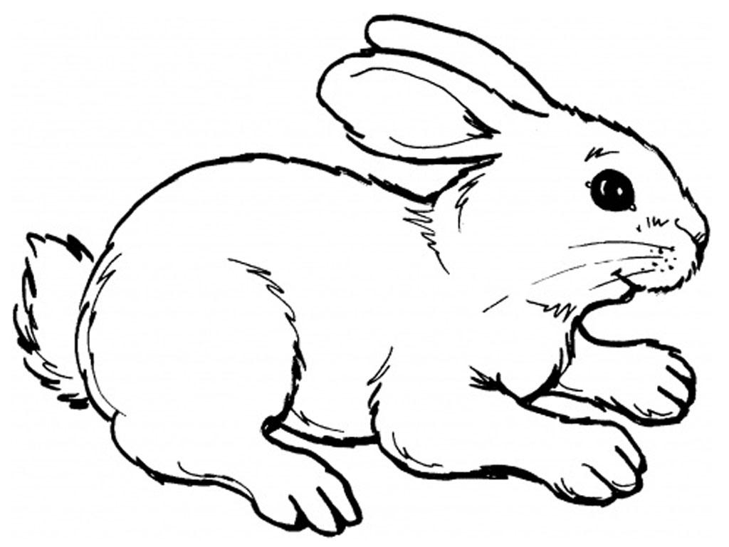 Drawn rabbit coloring page More Rabbits Pages on Realistic