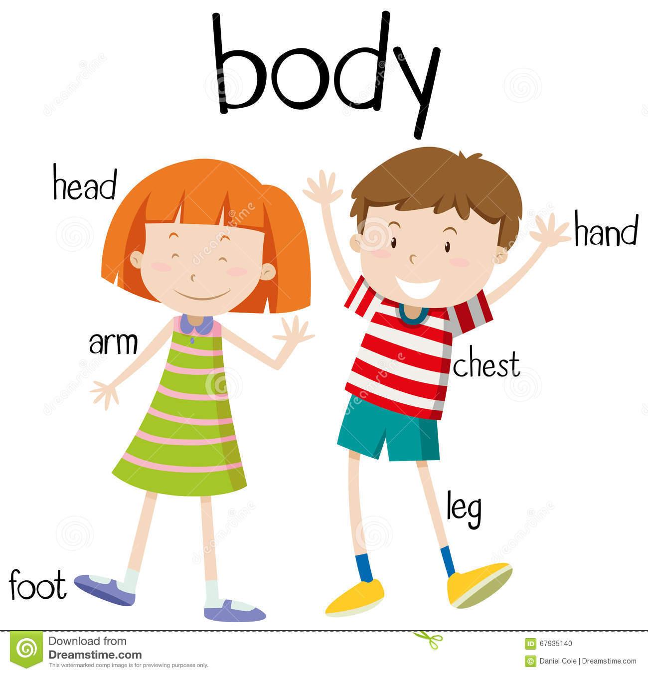 Feet clipart body part Human Body Basic Diagram Parts
