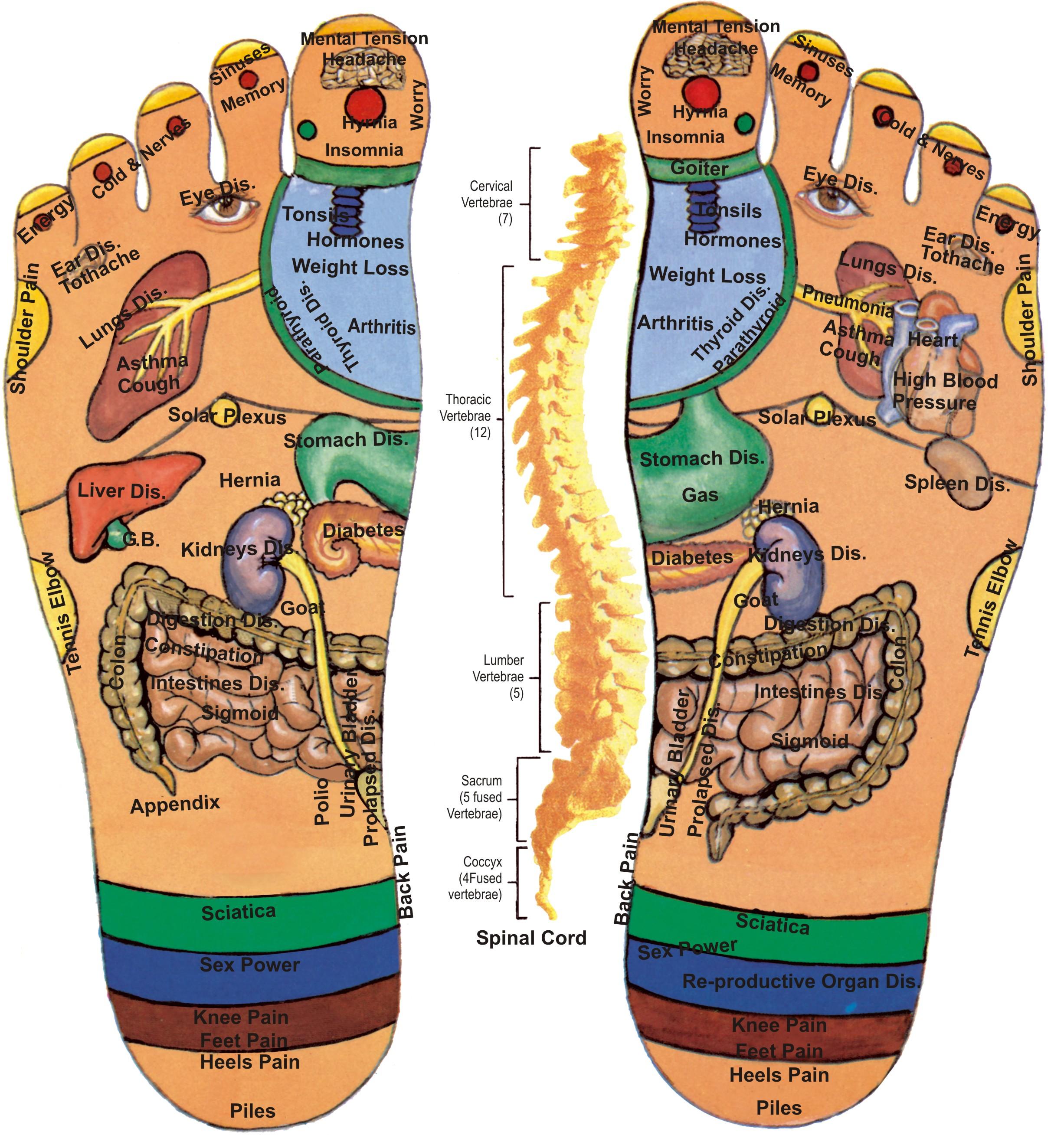 Feet clipart foot massage Therapy – Paolo Floresta Reflexology