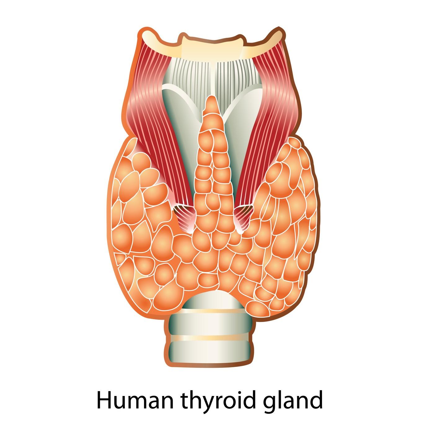 Feet clipart thyroid Life Selenium Thyroid Vibrant –