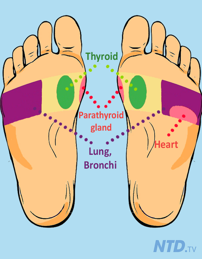Feet clipart thyroid Of and for to health—try