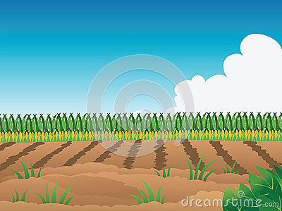 Cornfield clipart crop field Drawings Field Field Field clipart