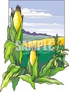 Cornfield clipart corn farm Corn Art of Corn Fields