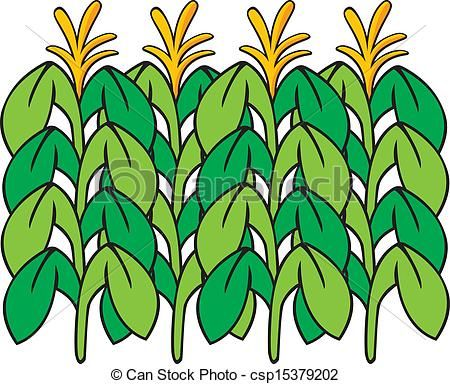 Feilds clipart corn field Stock Clipart Cornfield Illustrations images