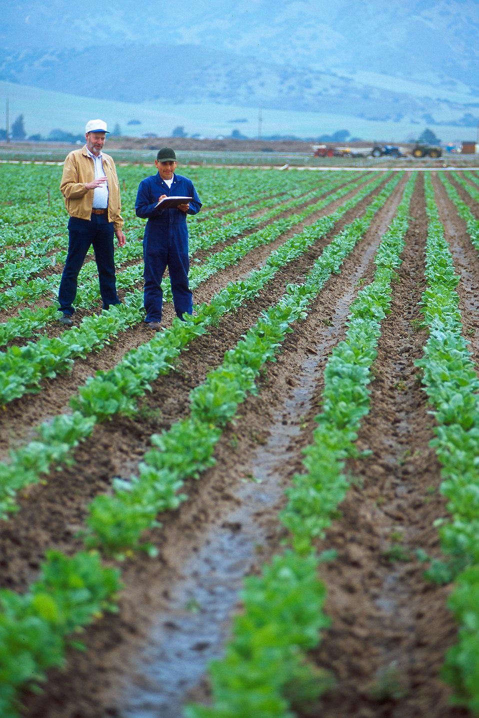 Feilds clipart farmer field Stock a # Stock Farmers