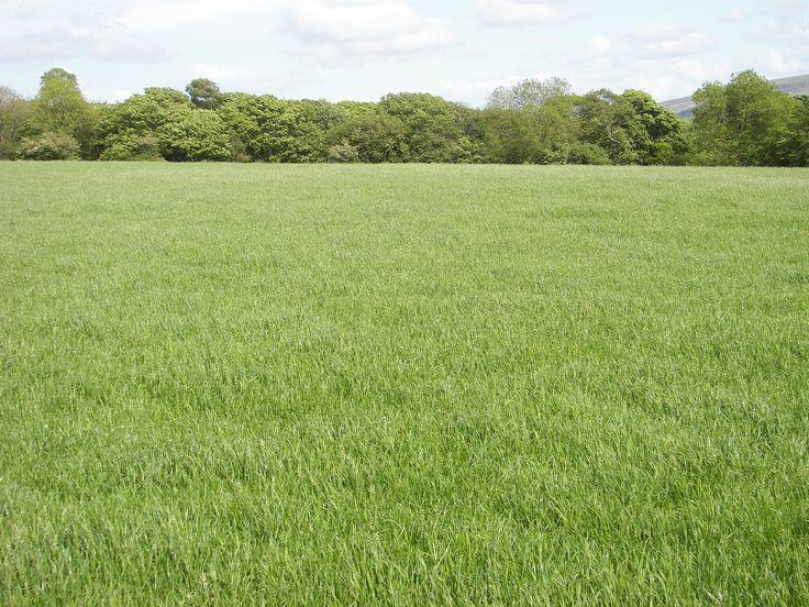 Feilds clipart grass field Pics clipart Pinterest 8 best