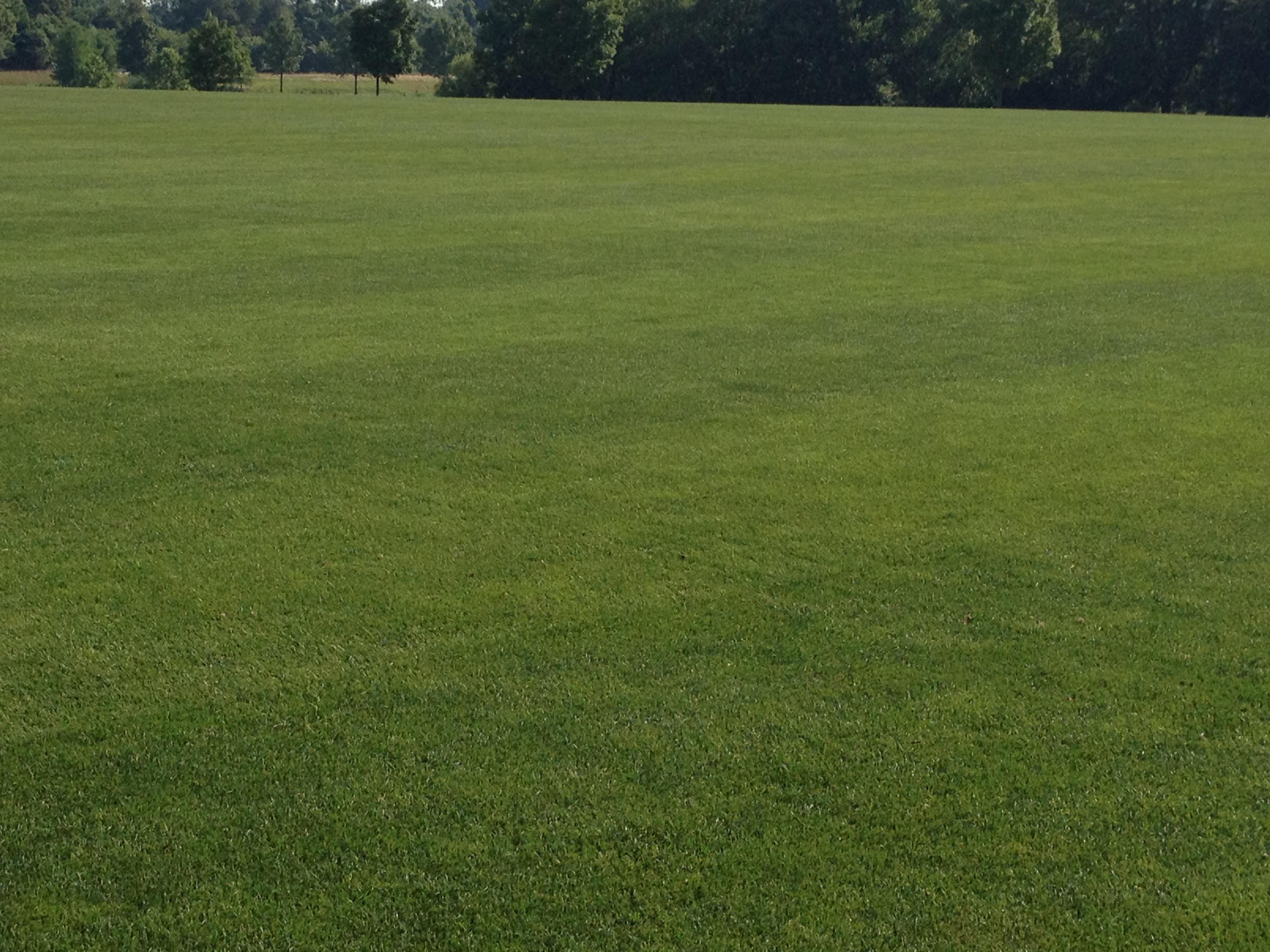 Feilds clipart grass field IMG_1116 Grass Growing Green Numbers