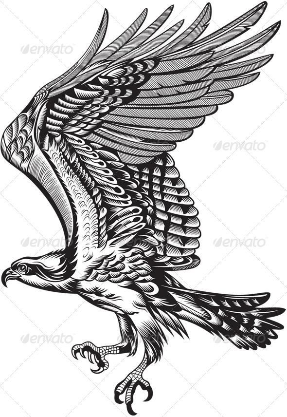 Fenix clipart hawk wing Wings Wings sign symbol Hawk