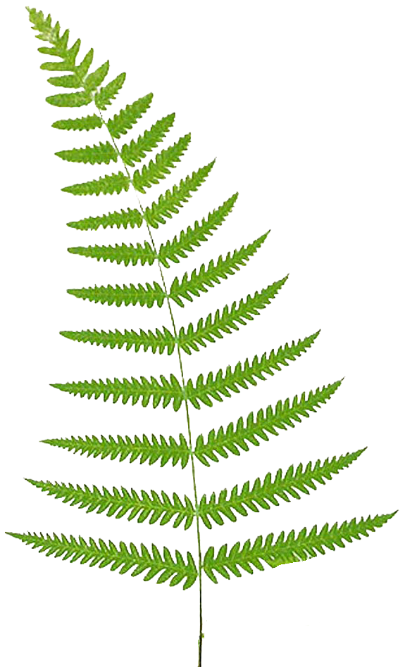 Fern clipart Free Clipart Free Free Frog