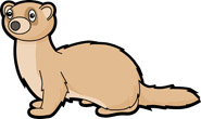 Ferret clipart From: Pictures Mammal Search Clipart