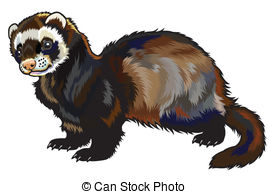 Ferret clipart Side Art view Ferrets royalty