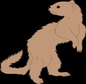 Ferret clipart #7