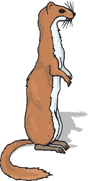 Ferret clipart #15