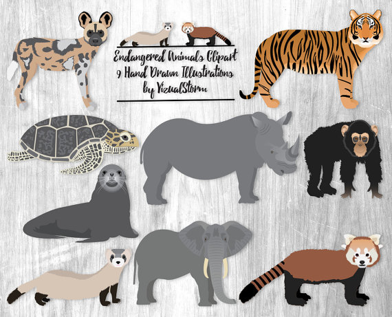 Animal Kingdom clipart endangered animal Scrapbooking Wild Panda Animal Ferret