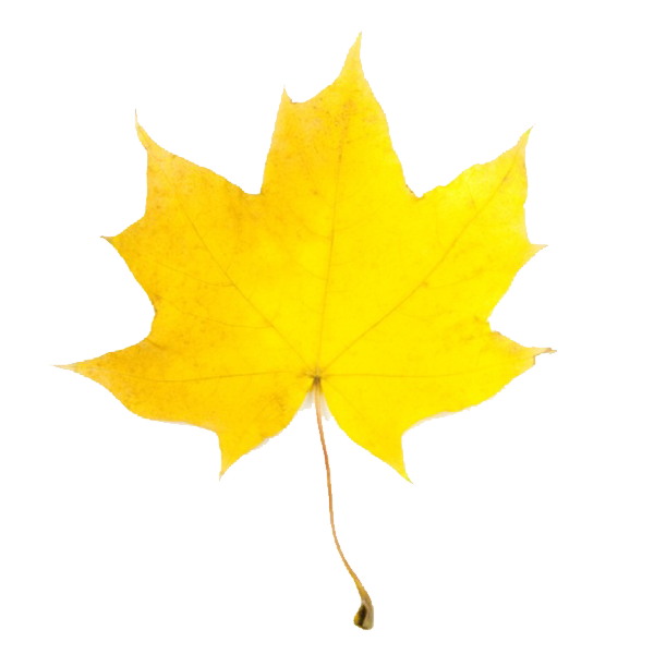 Leaves clipart yellow leaf #1