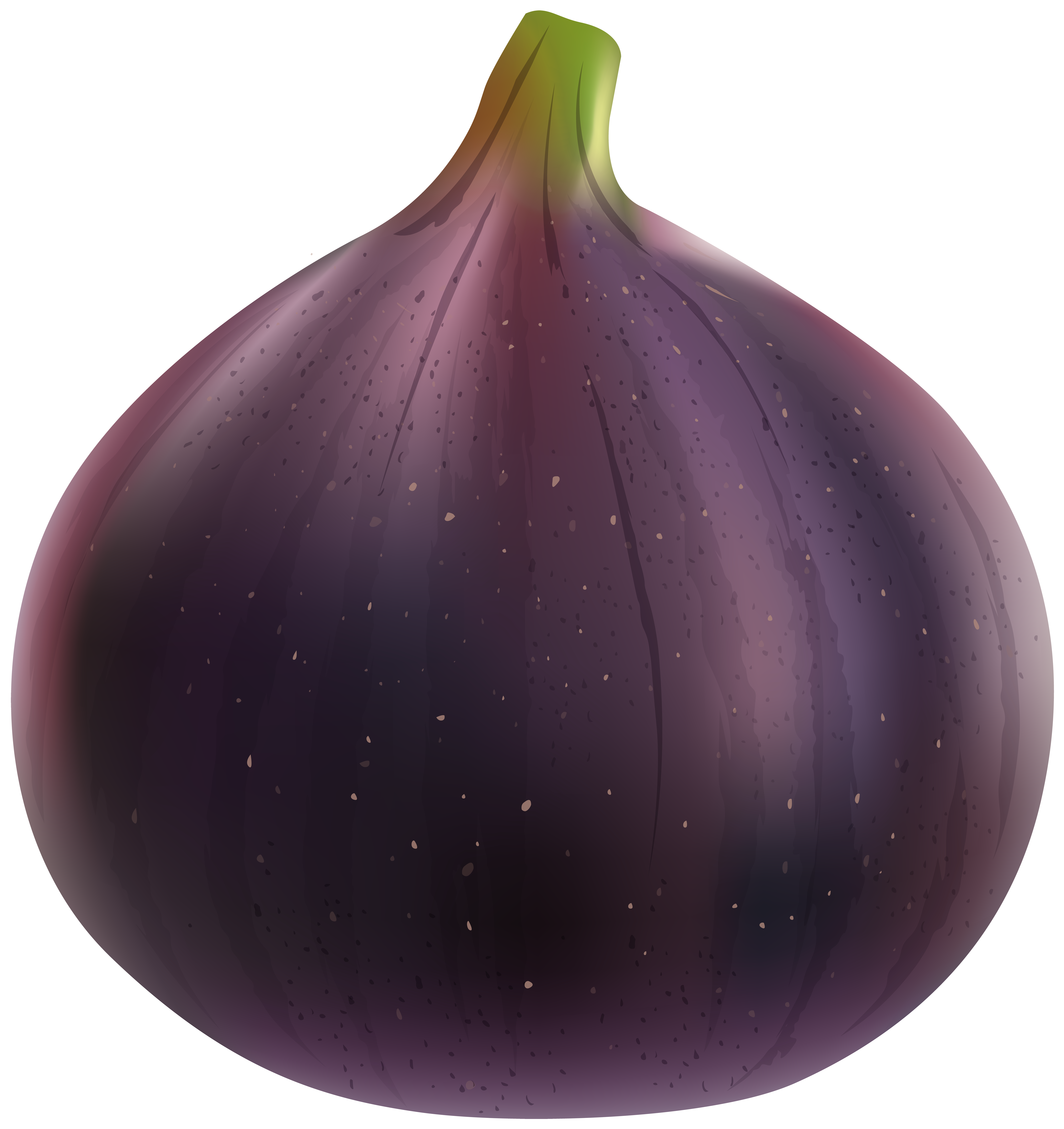 Fig clipart #13