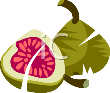 Fig clipart #7