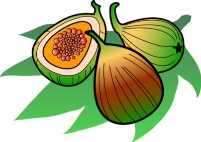 Fig clipart #3
