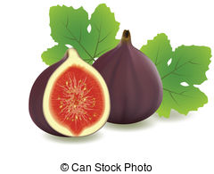 Fig clipart #4
