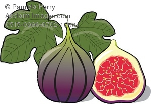 Fig clipart #6