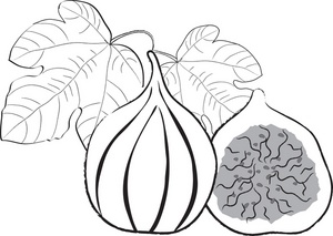 Fig clipart black and white Clipart Art And on Art