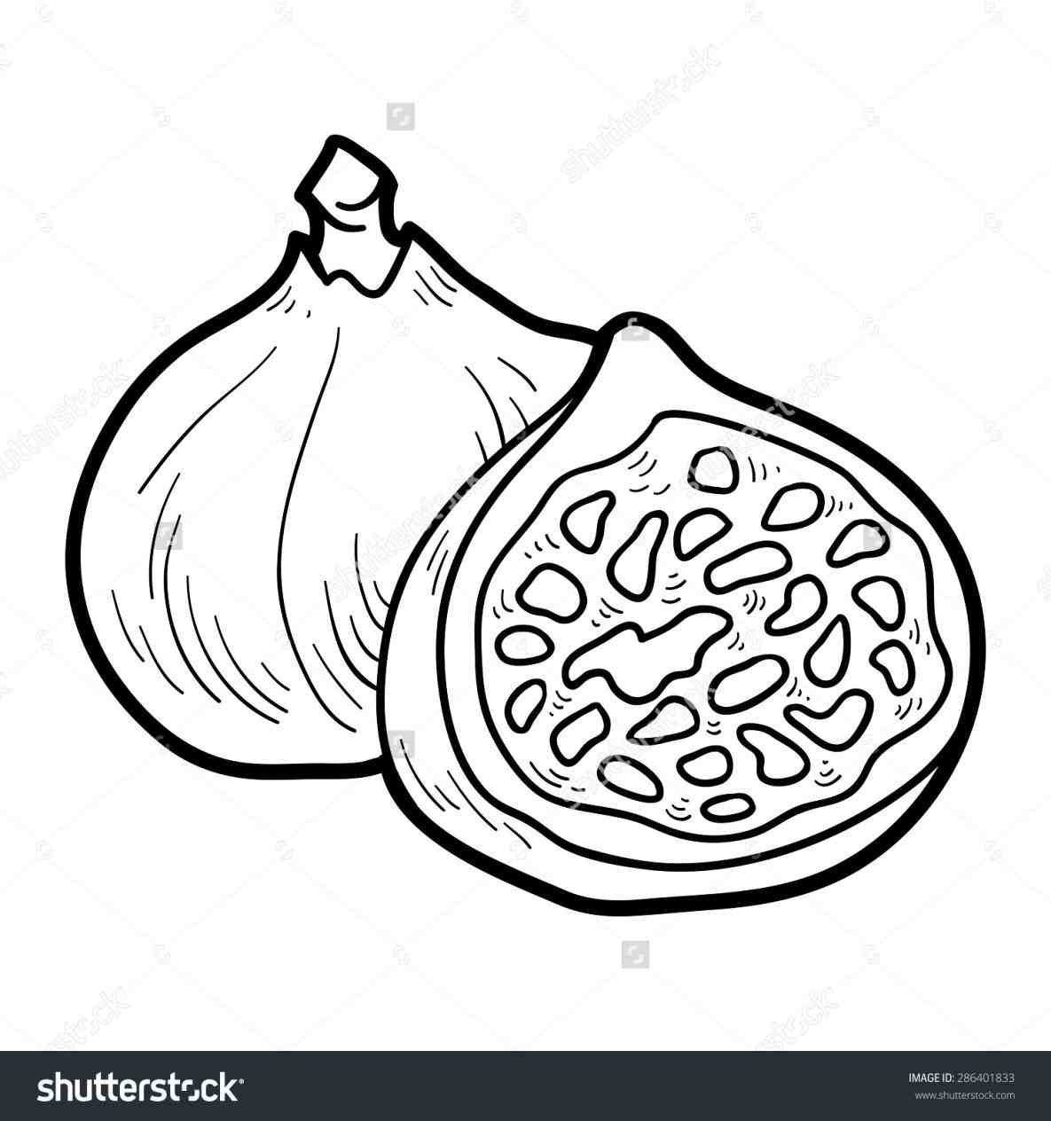 Fig clipart black and white › clipart and fig black