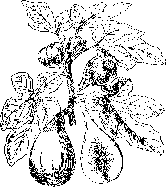 Fig clipart black and white And are bytes Windows modern