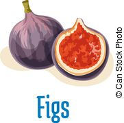 Fig clipart fresh Whole Sandpaper figs Vector cut