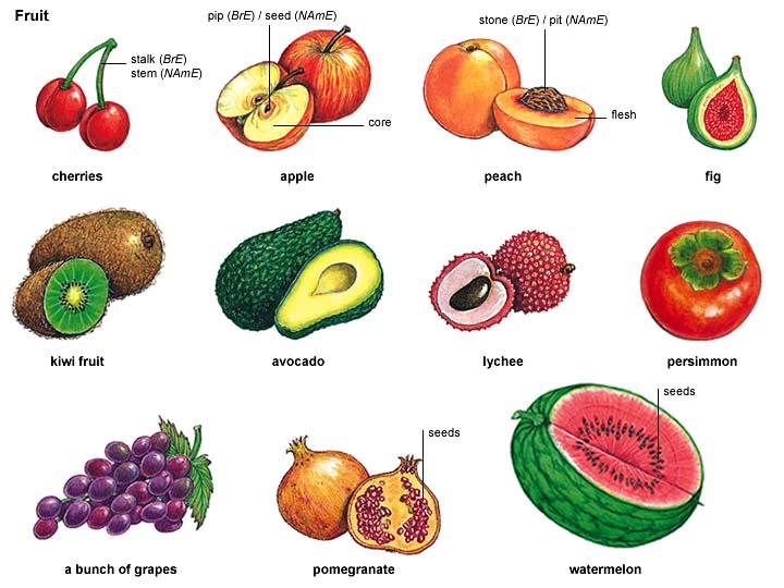 Nectarine clipart A often pronunciation sweet seeds