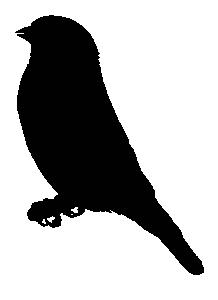 Finch clipart #7