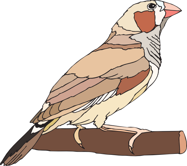 Finch clipart Finch Finch #68 finch 63