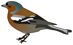 Finch clipart Clip Finch Male Chaffinch Art