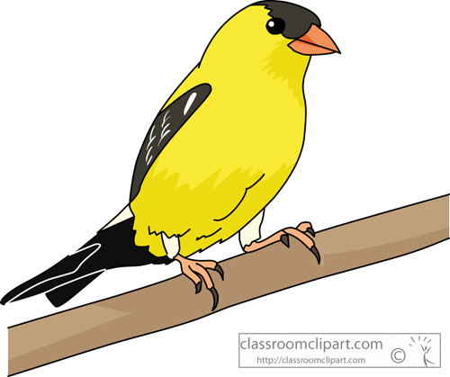 Finch clipart Clipart  From: for finch