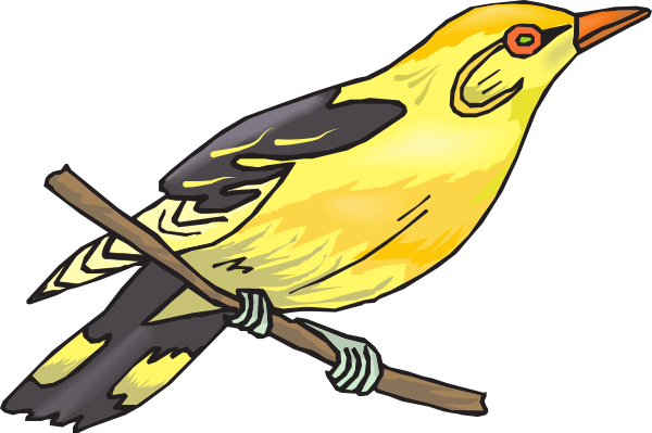 Finch clipart As: Clip art image Download