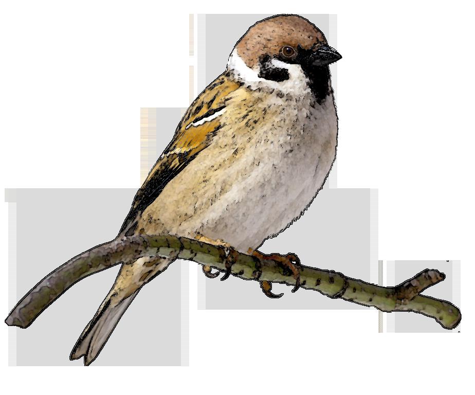 Nightingale clipart maya bird On Art Finch Clipart Clip