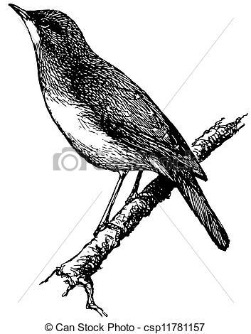 Nightingale clipart maya bird Art Nightingale Top Clipart Art