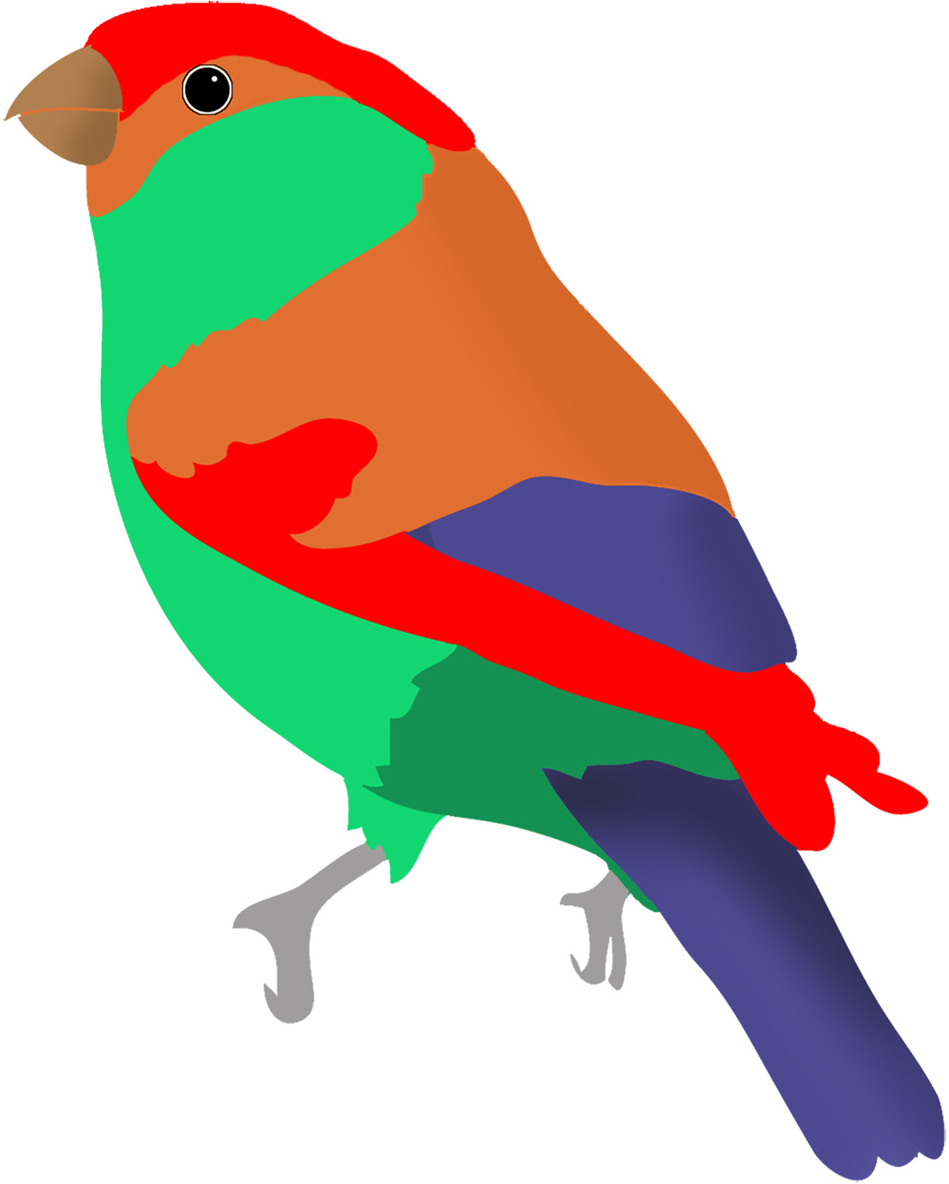 Brds clipart colorful bird Red Colorful redpoll green ·