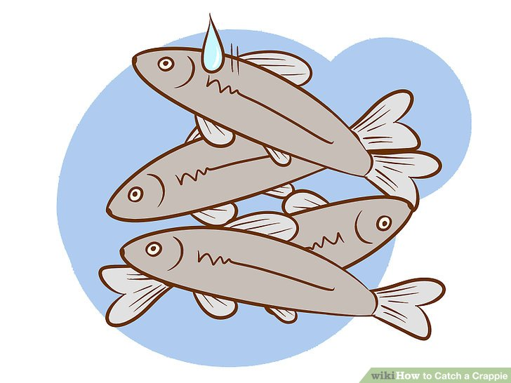 Fins clipart caught fish Titled Ways Catch Image Crappie