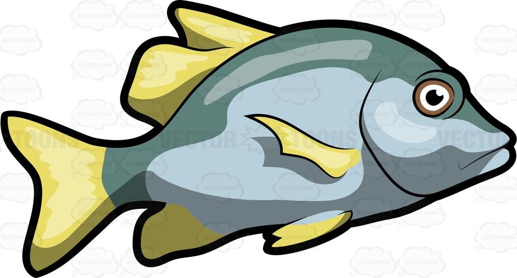 Fins clipart caught fish Virginalis #aquaria #aquaticvertebrate A Cartoon