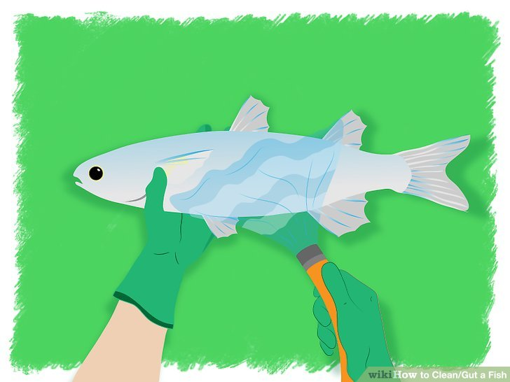 Fins clipart caught fish Titled Ways Clean/Gut Image Fish