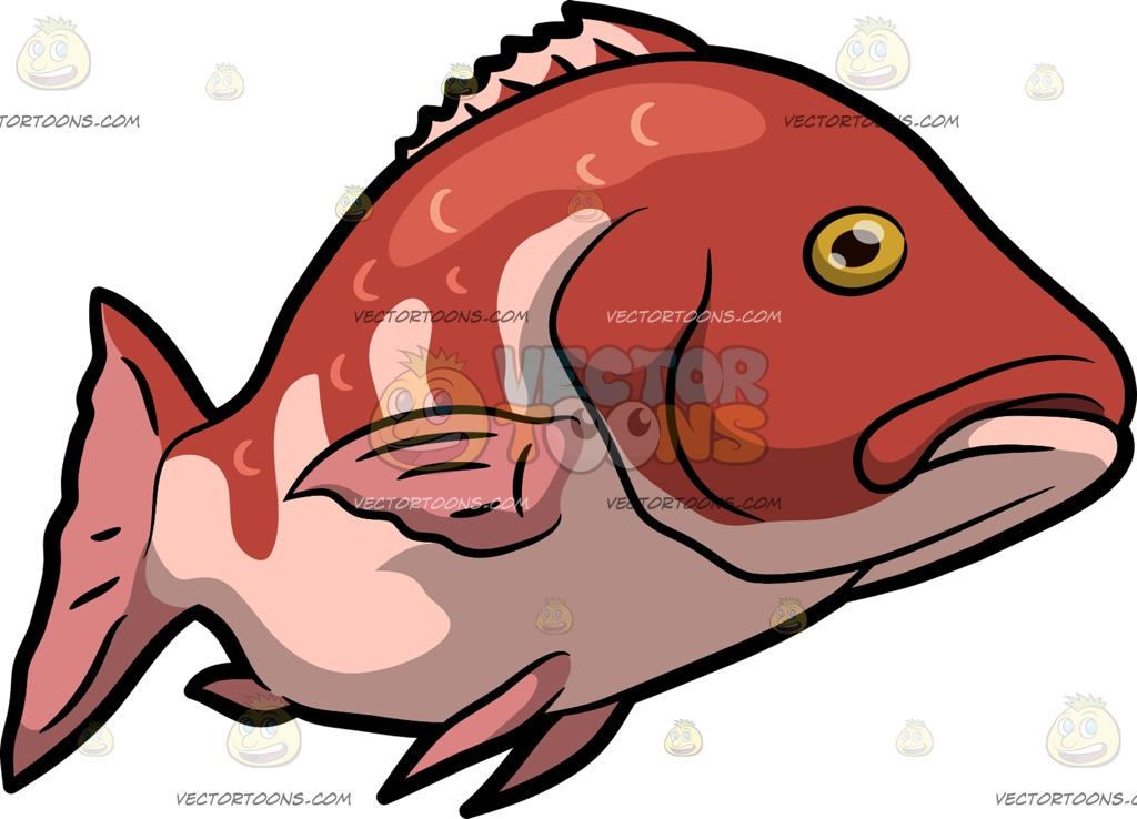 Fins clipart fish food Snapper Snapper Swims A ImagesFood