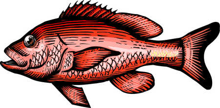 Fins clipart fish food Of red A drawing snapper