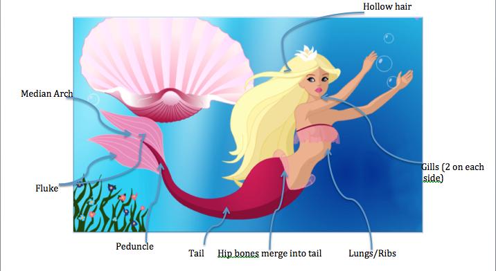 Fins clipart gills Mermaid Dreamers Biology Body Mermaid