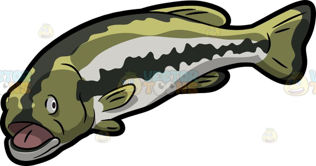 Fins clipart gills A Bass Clipart Large Cartoon