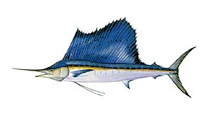 Fins clipart large fish Gulfstream Outer Fishing Big Banks