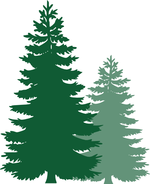 Pine clipart #8