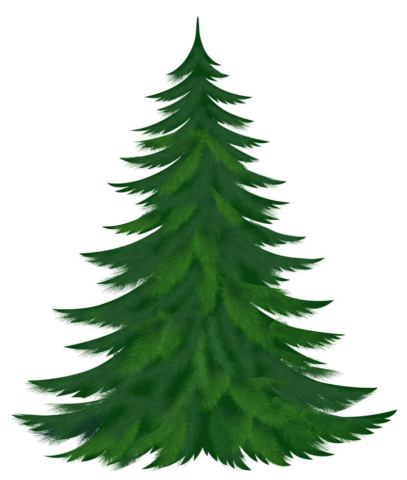 Fir Tree clipart Download drawings clipart Tree Tree