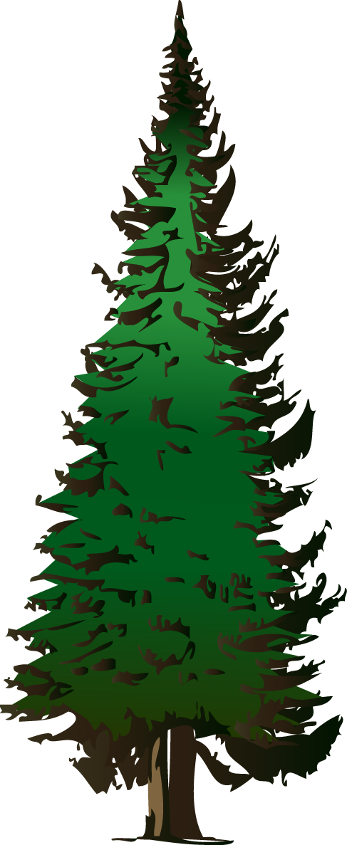 Pine clipart #3